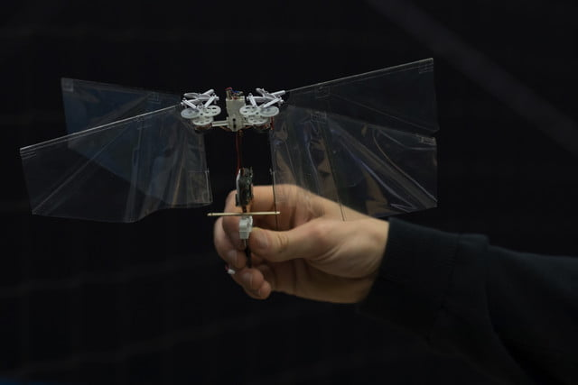 robot flaps just like a fruit fly 20180124 img 4986