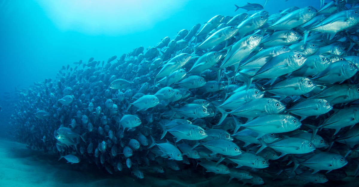 Fishy surveillance system could keep tabs on ocean animals for Most sustainable fish