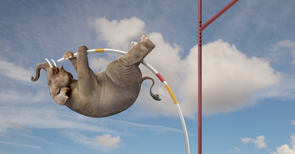 Animals, algorithms, and obstacle courses: Welcome to the A I