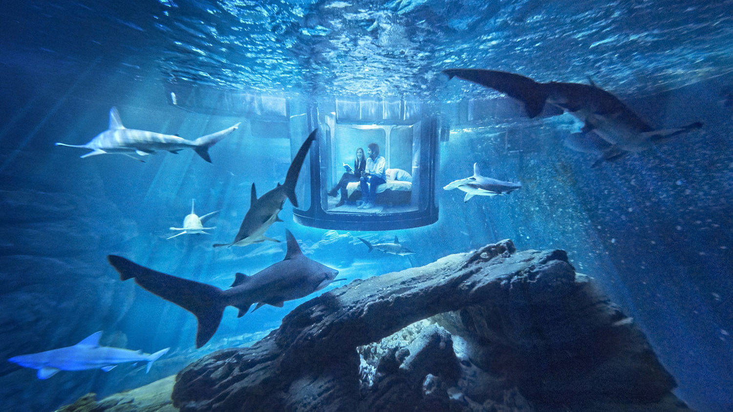 Sleep With The Fishes And Sharks In Airbnbs Underwater Aquarium - 10 awesome aquariums where you can spend the night with sharks