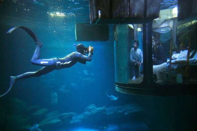 sleep underwater paris aquarium sharks airbnb de shark 008