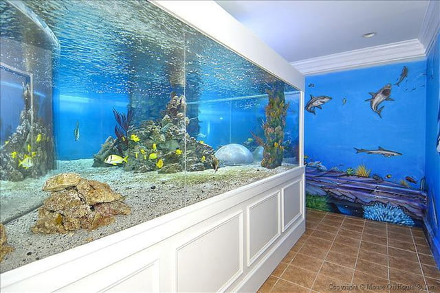 homes with their own shark tanks dsc0469