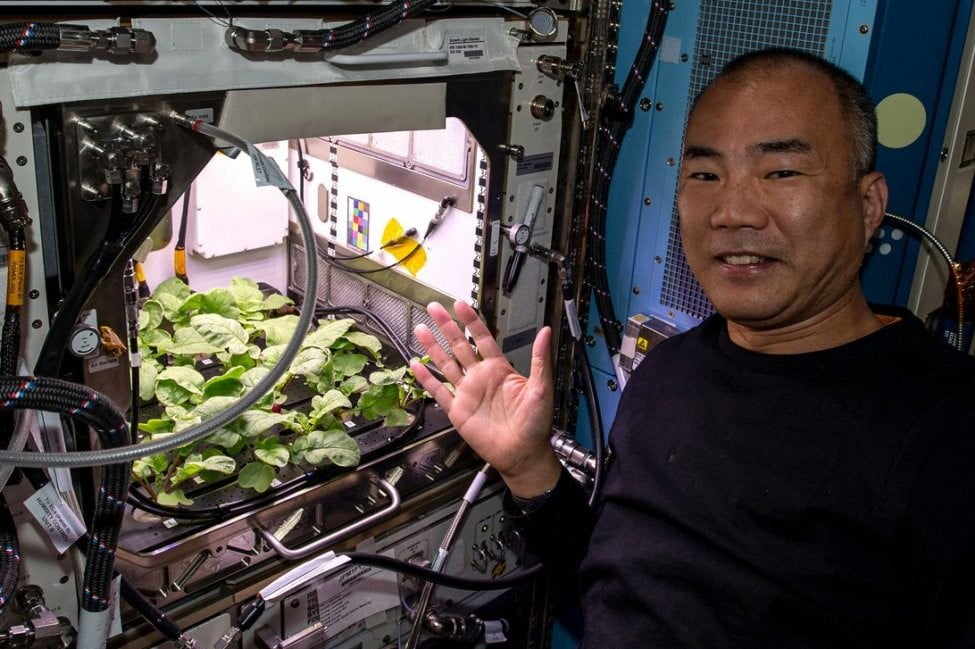 ISS Astronauts eat radishes grown in space for first time