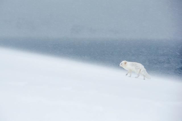 how to photograph the arctic with joshua holko interview arcticfoxiceland 9910 edit