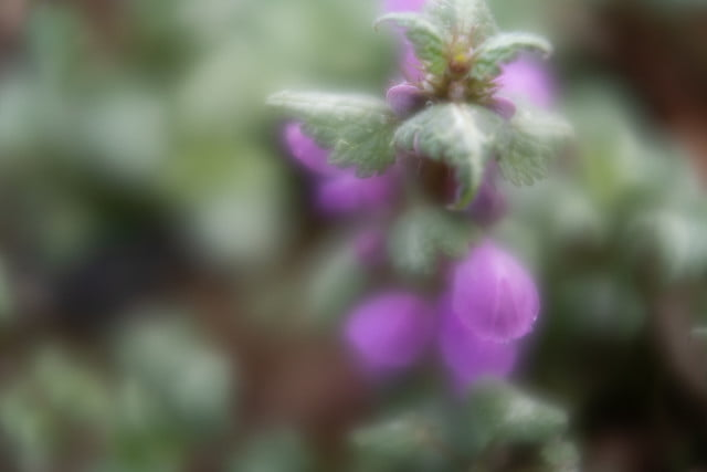 lensbaby velvet 28 review 12