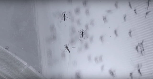 control mosquitos verily google insects
