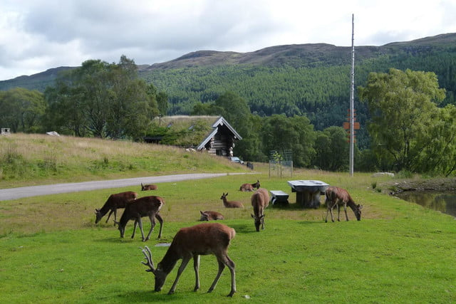 retreat from society and relax in these idyllic cabins around the world eagle brae highland log 15