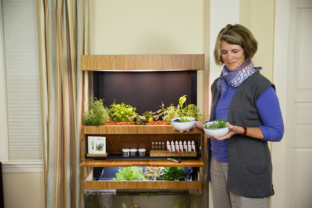 the grove ecosystem launches a kickstarter for its indoor garden a27a5423 edit
