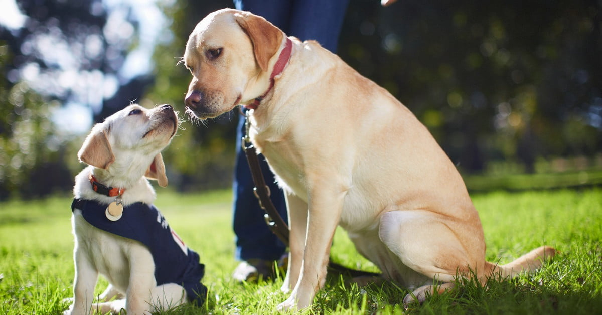 how to be your dogs best friend a training manual for dog owners with earbuds