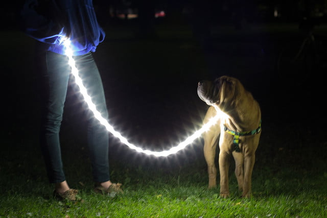 the luminoodle is a portable led light strip dog collar