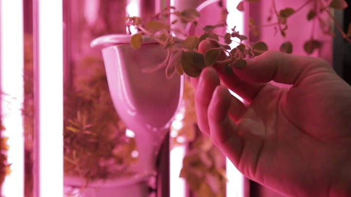 Natufia Labs to Launch the Natufia Kitchen Garden at CES 2017