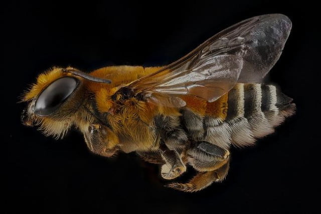 high resolution macro photos show amazing details bees wont cure fear bugs sam droge bee 1