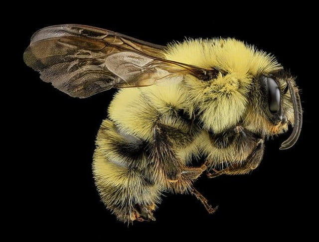 high resolution macro photos show amazing details bees wont cure fear bugs sam droge bee 11