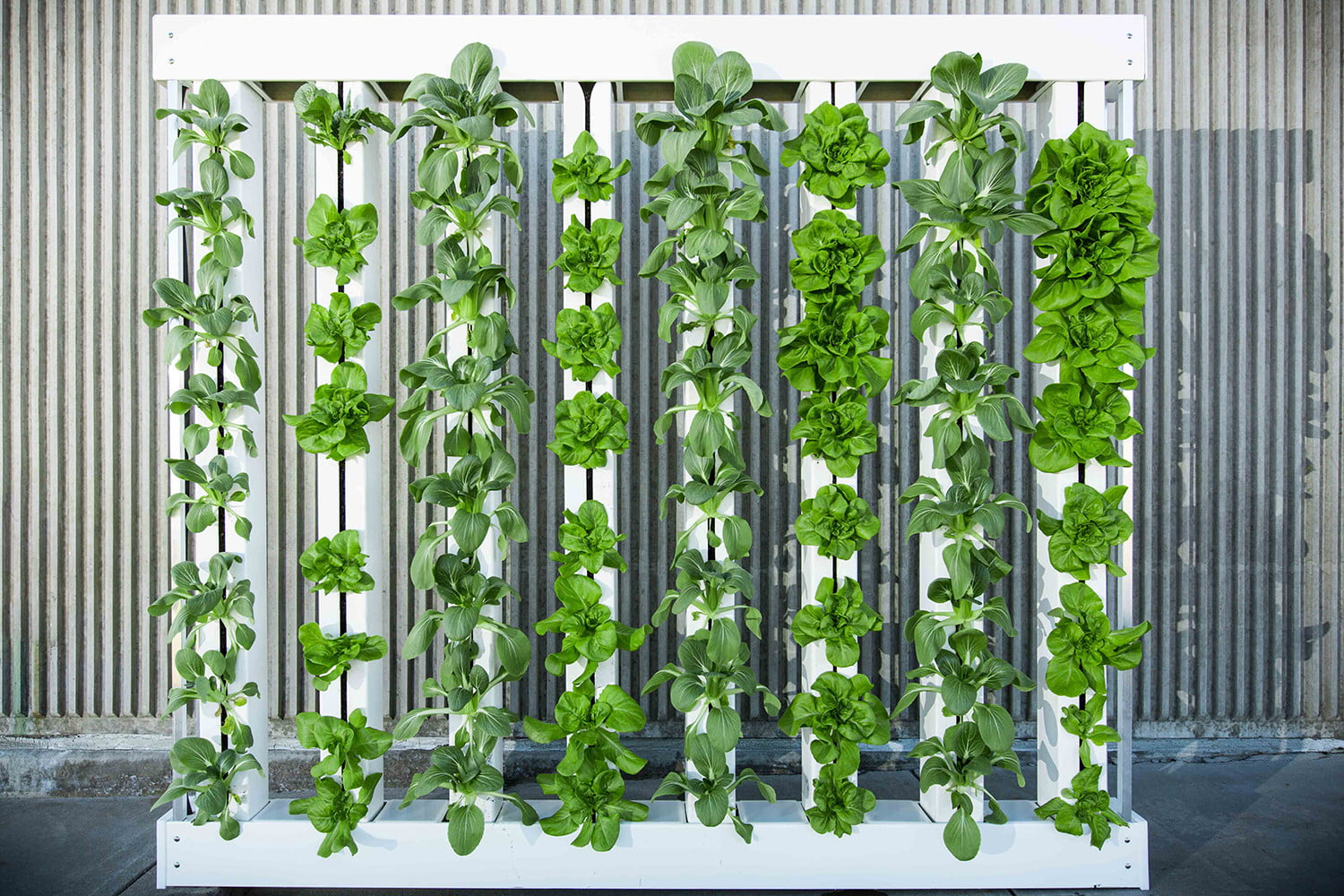 Tiny Homes Cost Will Vertical Farming Continue To Grow Or Has It Hit The