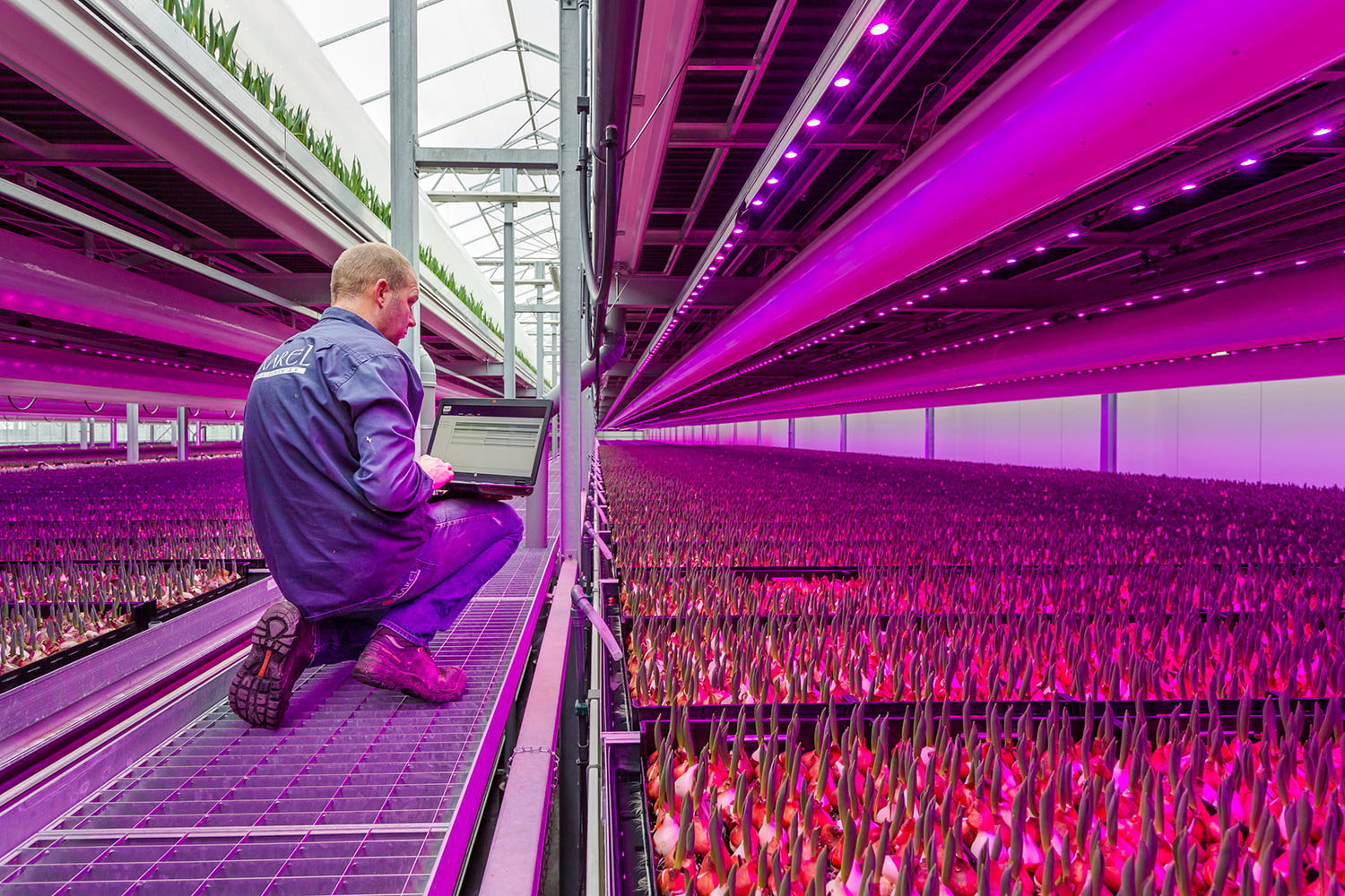 Will Vertical Farming Continue To Grow Or Has It Hit The Greenhouse Ceiling Digital Trends